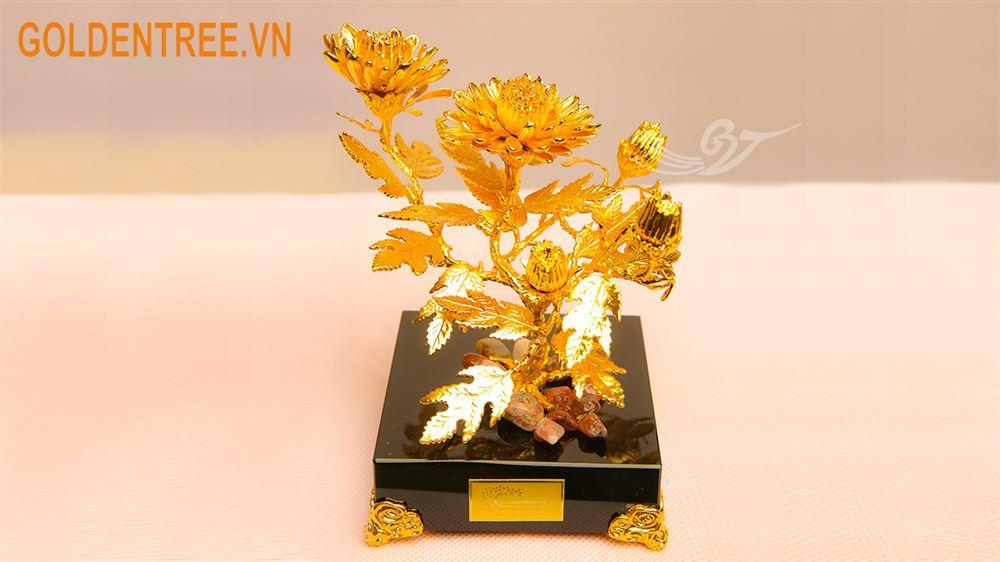 Cây hoa cúc mạ vàng