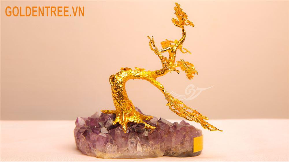 Cây tùng mạ vàng