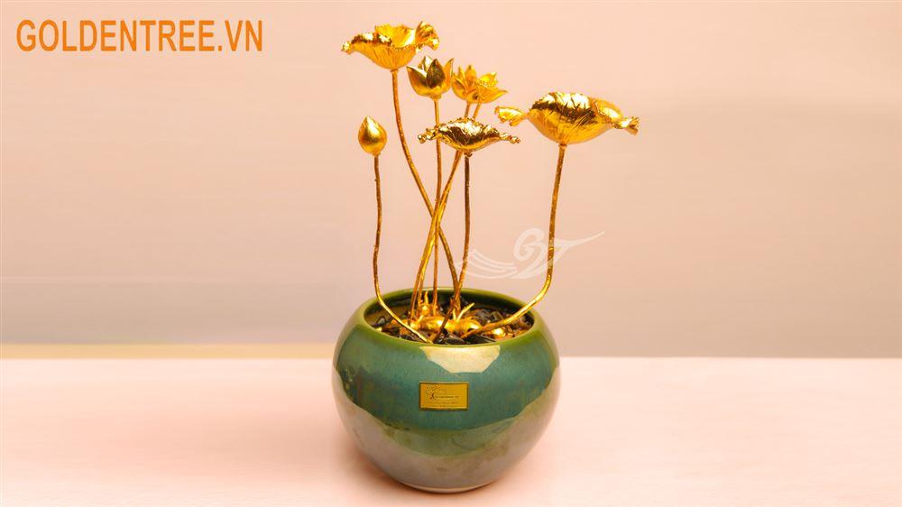 Cây hoa sen mạ vàng