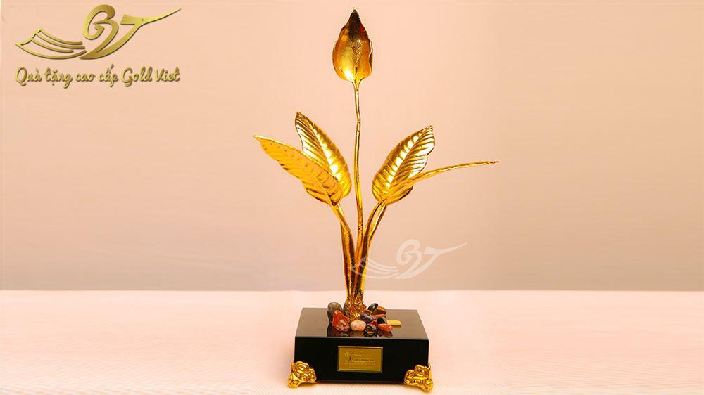 cây ý lan mạ vàng 1