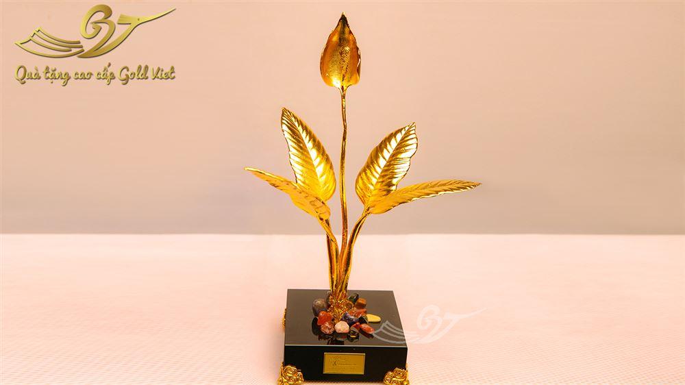 cây ý lan mạ vàng 2